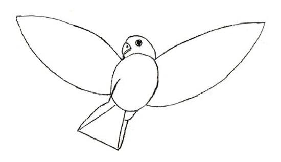 Как нарисовать птицу карандашом?