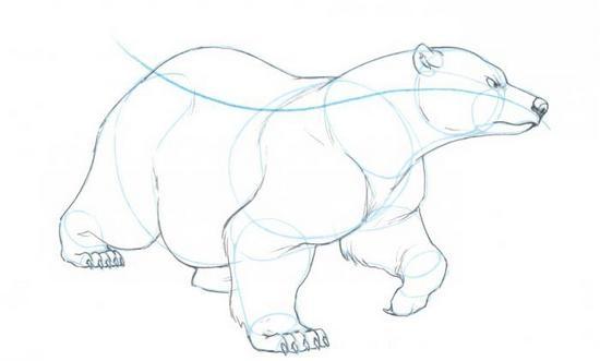 Полярный медведь карандашом