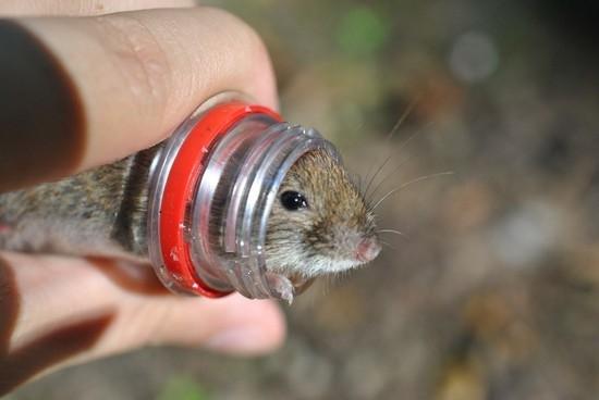на который искать крыс да мышей
