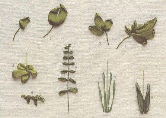 Вышивка листья лентами: схемы