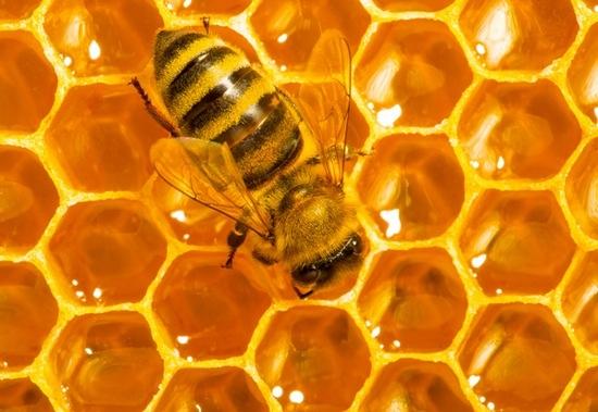 Идем на рынок за медом: как не дать себя обмануть при покупке?