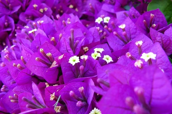 Обозначения для цветов