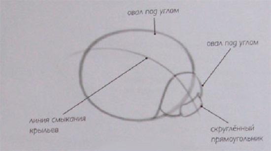 нарисуем прямоугольник, но только с закругленными краями