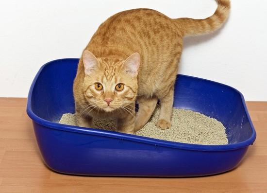Картинки по запросу цистит у кота