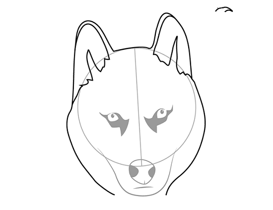 округляем мордочку собаки