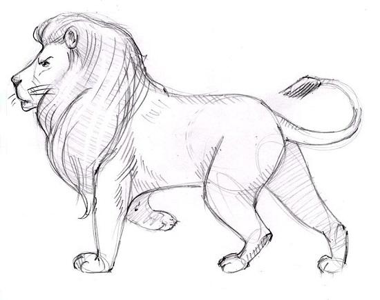 как нарисовать льва карандашом поэтапно для начинающих