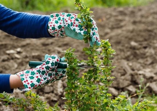Сажаем ягодные кустарники осенью 420
