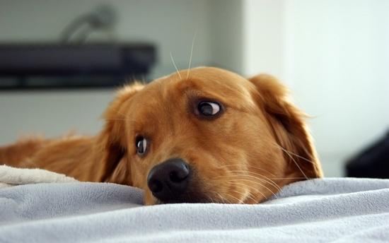 Симптомы артрита у собак 10 лучших препаратов для лечения