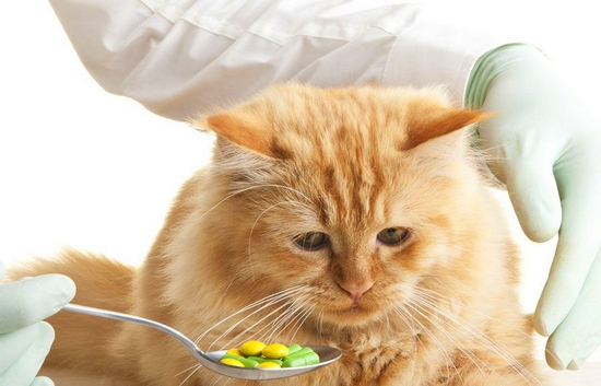 Марены красильной экстракт коту