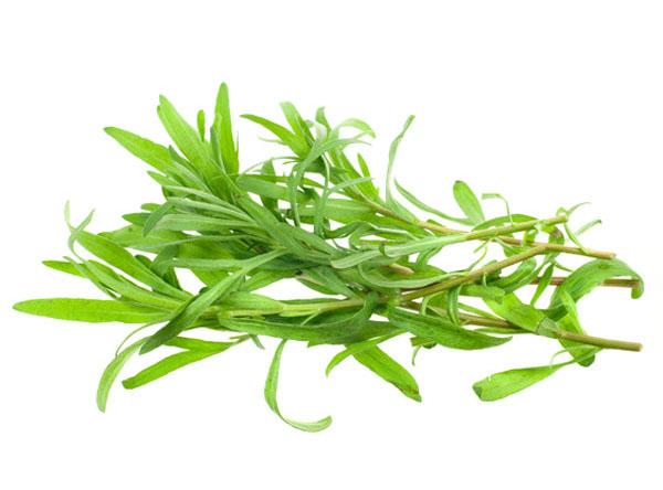 Растение тархун применение