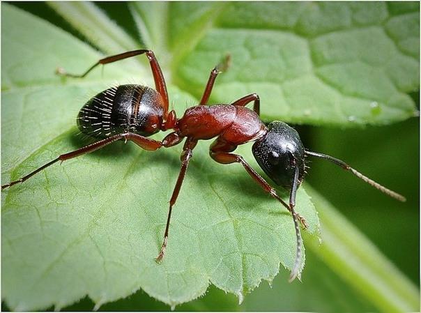 Избавиться от тараканов своими руками 28