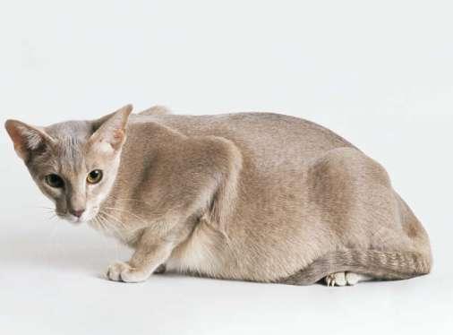 С приближением родов кошка может