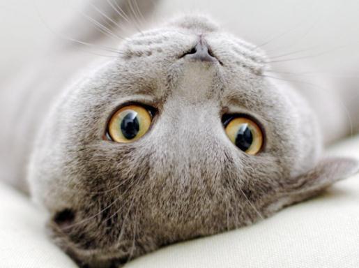 Беременной кошке нужен уход а кошке с