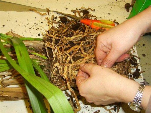 автоматический полив для комнатных растений своими руками